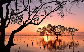 Mindanao, Philippines, Минданао, Филиппины, залив, закат, мангры, деревья