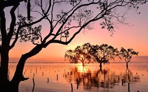 Mindanao, Philippines, bay, sunset, Mangroves, trees