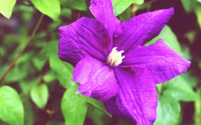 Цветы, цветок, зелень, фиолетовый, лиловый