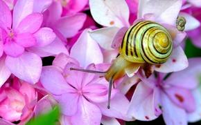 Flowers, hydrangea, snail, horns, Macro