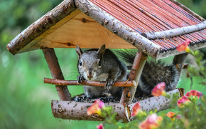 squirrel, feeder, cabin, Flowers