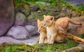 Cubs, Gatinhos, crianças, gêmeos