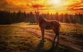 cavallo, puledro, tramonto