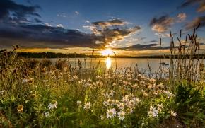 St Aidan's RSPB, West Yorkshire, England, Западный Йоркшир, Англия, заповедник, озеро, закат, ромашки, цветы