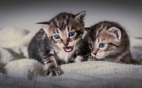Kocięta, dzieci, bliźniaki