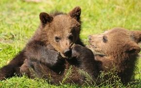 Niedźwiedzie, Niedźwiedzie, gra, zabawa