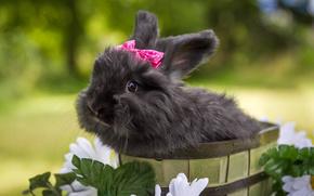 чёрный кролик, кролик, цветы