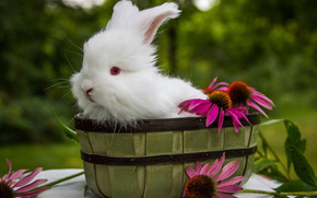 White Rabbit, rabbit, Flowers