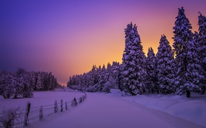 Biscaglia, Paesi Baschi, Spagna, Bizkaia, Paesi Baschi, Spagna, inverno, nevicata, derive, tramonto, foresta, alberi, abete rosso