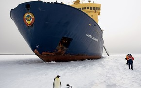 ship, icebreaker, penguin, ice, coat of arms, ussr, people, Antaktika, Antarctica, south