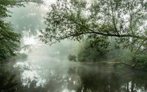 morning, fog, river, trees