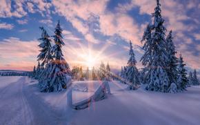 norvegia, Norvegia, inverno, nevicata, alberi, abete rosso, stradale