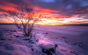 Lago Tyrifjorden, Lago Tyri, Buskerud, norvegia, Lago Tyrifjorden, Buskerud, Norvegia, lago, inverno, nevicata, albero, tramonto