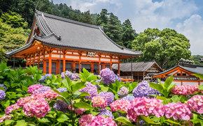 Katsuō-ji Temple, Minoh, Japan, Миноо, Япония, храм, гортензии, цветы
