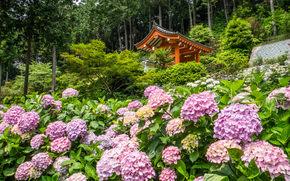 Mimuroto-ji Temple, Kyoto, Japan, Киото, Япония, храм, гортензии, цветы, беседка, деревья