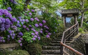 Yoshimine-dera Temple, Kyoto, Japan, Киото, Япония, храм, лестница, гортензии, цветы