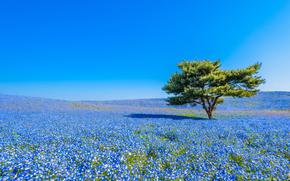 pole, Kwiaty, drzewo, krajobraz