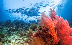 mer, Caral, poisson, fond de la mer, nature