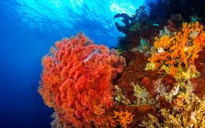 Коралловые рифы, море, морское дно, рыбы, природа
