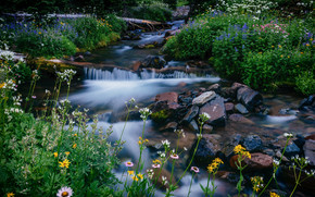 Melody Creek, Mount Rainier National Park, Washington, Parco Nazionale Parco nazionale del Monte Rainier, Mount Rainier, Washington, torrente, Fiori, pietre