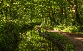 West Devon, England, Западный Девон, Англия, река, речка, лес, деревья, тропинка, зелень