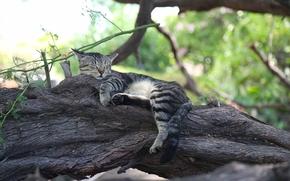 COTE, gato, Adormecido, sonho, recreação, árvore