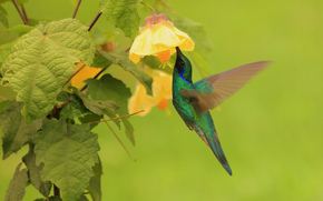 колибри, птица, цветок, листья