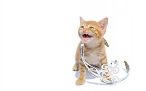 kitten, pussycat, princess, diadem