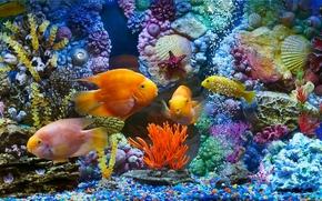 acquario, pesce, pesce, Coralli, SEASHELLS