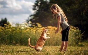 девочка, кот, кошка, друзья, дружба