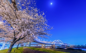Adachi, Tokio, Japón, Río Arakawa, Adachi, Tokyo, Japón, Río Arakawa, puente, río, árboles, Sakura, cereza