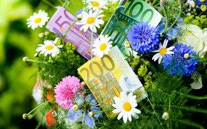 pieniądze, euro, banknoty, rachunek, uwaga, waluta, Kwiaty, knapweed, rumianek