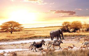 закат, кусты, саванна, дерево, Африка, солнце, слон, зебра, антилопа
