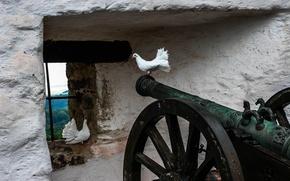 gun, pigeon, grill, window