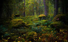 forest, nature, trees, moss, foliage