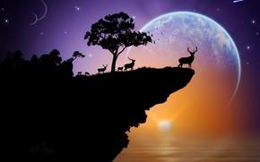 日落, 地球, 剪影, 鹿, 空间