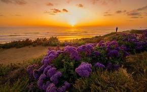 Océano Pacífico, California, Pacífico, California, océano, puesta del sol, costa, Flores