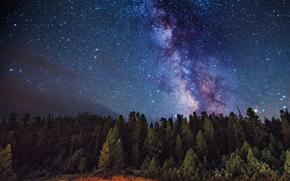 Млечный Путь, космос, деревья, звезды, тайны, лес, природа, Земля