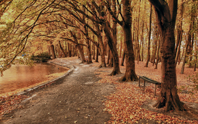 jesień, park, las, drzew, staw, droga, Bench, krajobraz