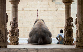 man, elephant, recreation, India