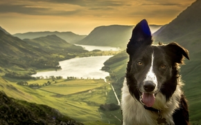 Border Collies, dog, Snout, nature, lake, Mountains, valley, panorama