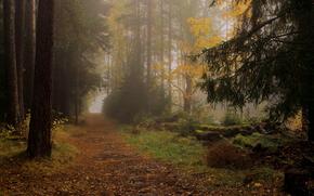 осень, лес, деревья, дорога, туман, пейзаж