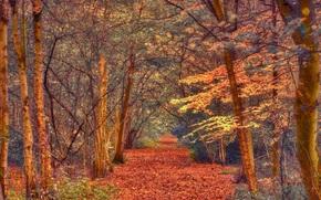 autunno, foresta, alberi, stradale, paesaggio