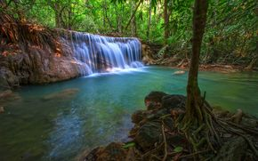 jungle, forest, trees, small river, waterfall, Rocks, nature