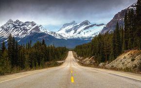 Montagne, stradale, foresta, alberi, paesaggio
