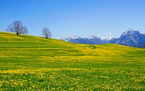 Mountains, field, trees, Flowers, landscape