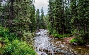 foresta, alberi, fiume, pietre, natura