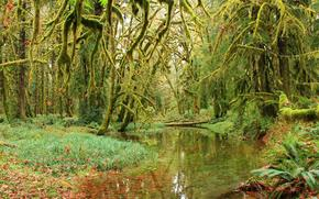 forest, trees, moss, pond, nature