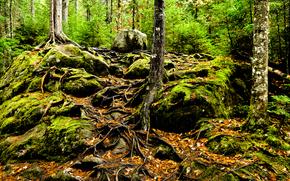 лес, деревья, камни, корни, природа