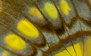 крыло бабочки, бабочка, крылышко, макро, текстура